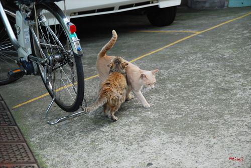 20131129さとる写真 足し合う猫