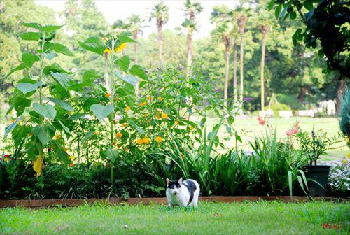 20131222さとる写真―朝散歩の猫