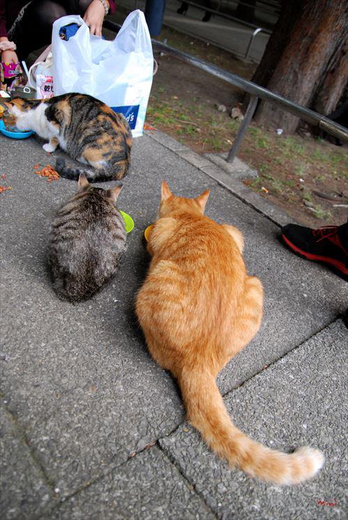 20131229さとる写真-まんま猫