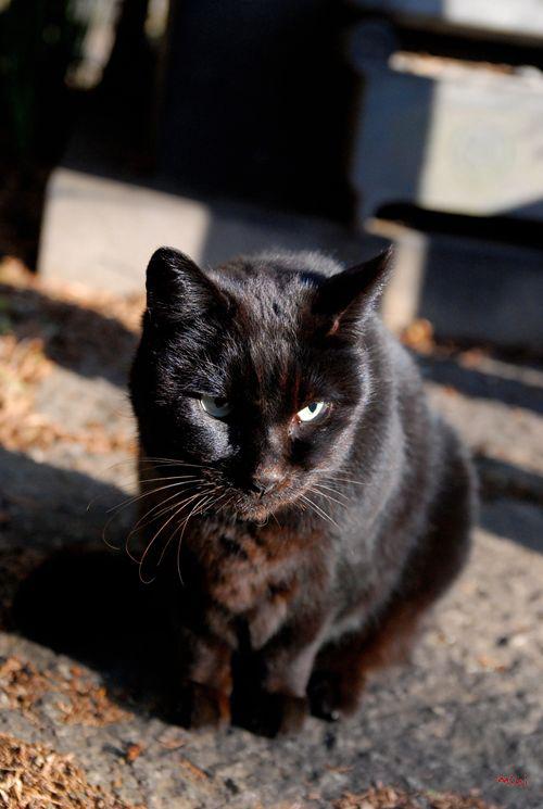 20131228さとる写真-決める猫