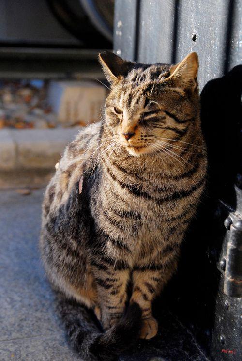 20131223さとる写真ー考へる猫