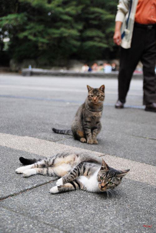 20131224さとる写真-それぞれ猫