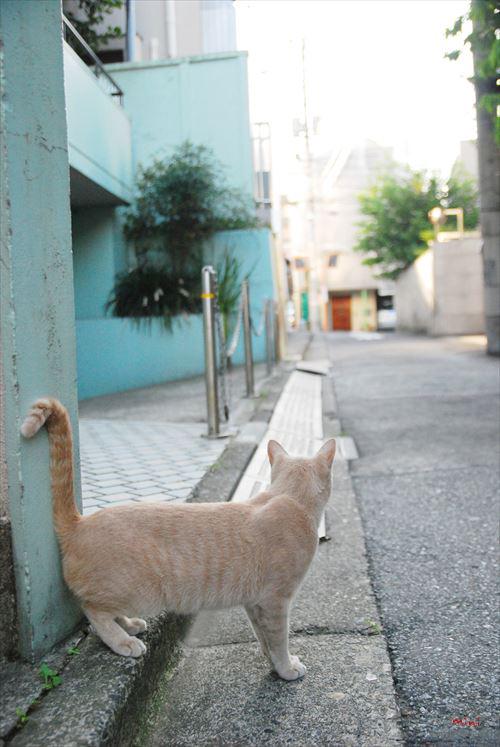 20131231さとる写真-見送る猫