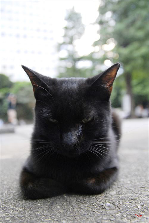 20131226さとる写真-黙る猫