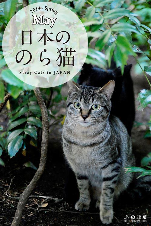 日本ののら猫_R