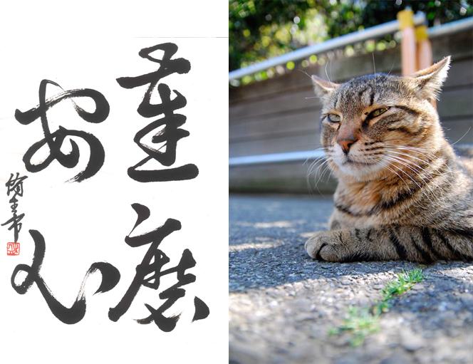 達磨安心な猫