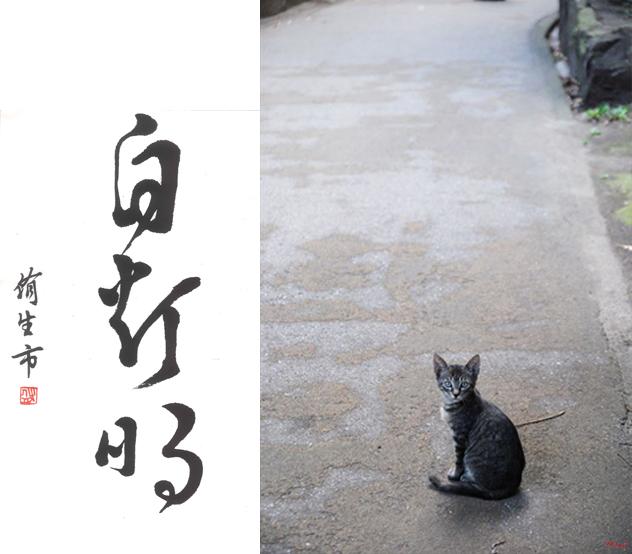 自灯明の猫